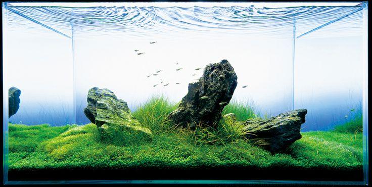 Voorgrondplant aquarium