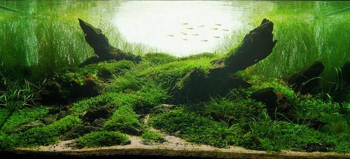 5 tips voor een natuurlijker, hypnotiserend aquarium