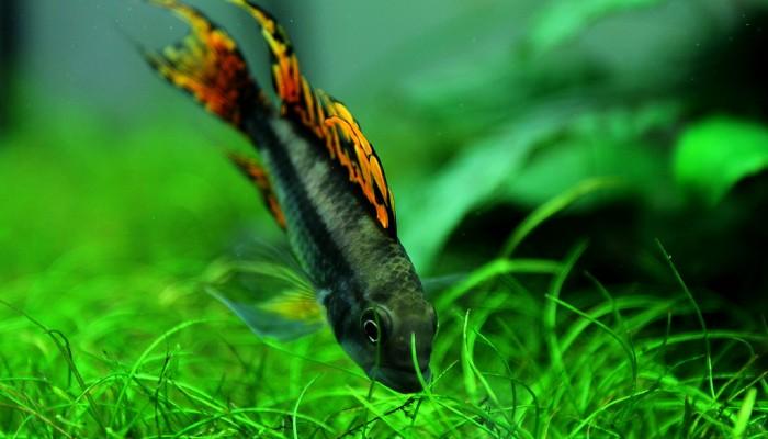 Vijf plantjes voor een heerlijk groene aquarium voorgrond