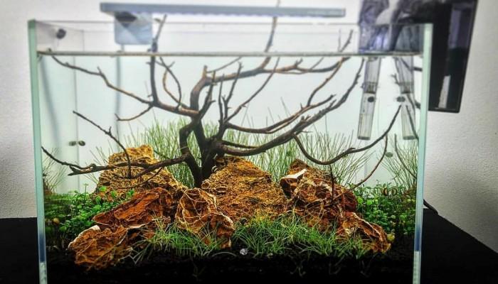 Algbestrijding aquarium