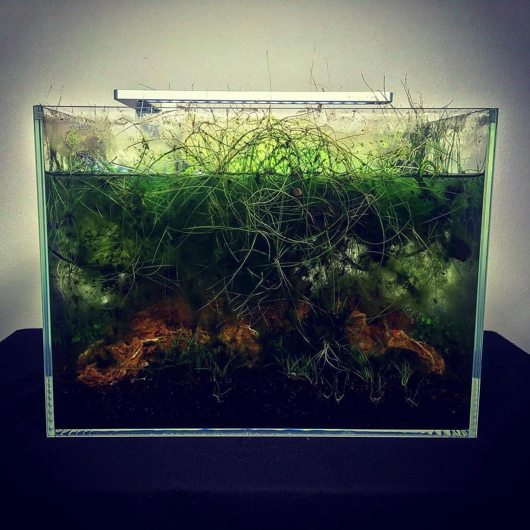 Algen bestrijden in het aquarium