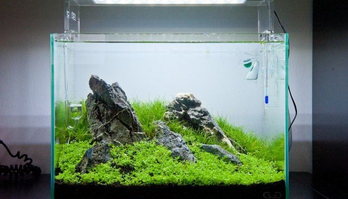 https://www.aquascaping-blog.com/wp-content/uploads/2016/10/ada-aquarium-led-700x400.jpg