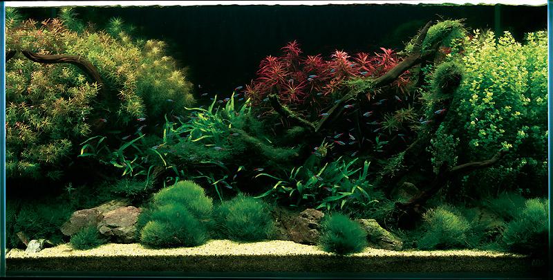ADA aquarium