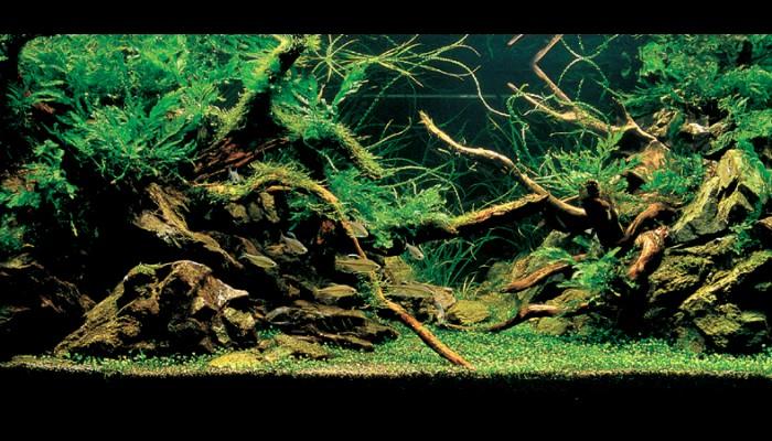 6 geheimpjes om lekker veel diepte in je aquarium te creëren