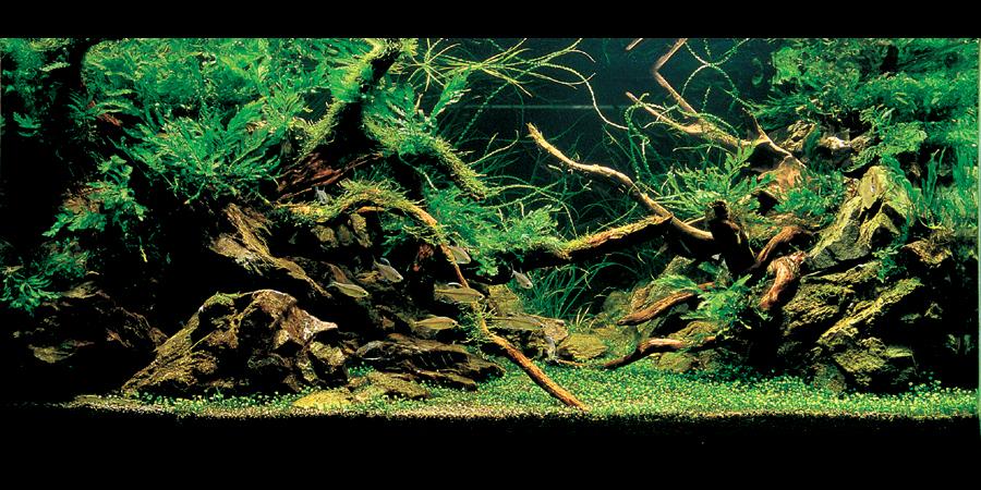 Meer Diepte In Je Aquarium Hier 6 Geheimpjes Voor Je