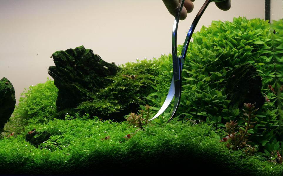 Aquariumplanten snoeien