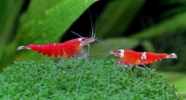 """Algeneters in je aquarium: je persoonlijke """"hulptroepen"""" in de strijd tegen algen"""