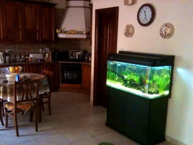 plaats van aquarium