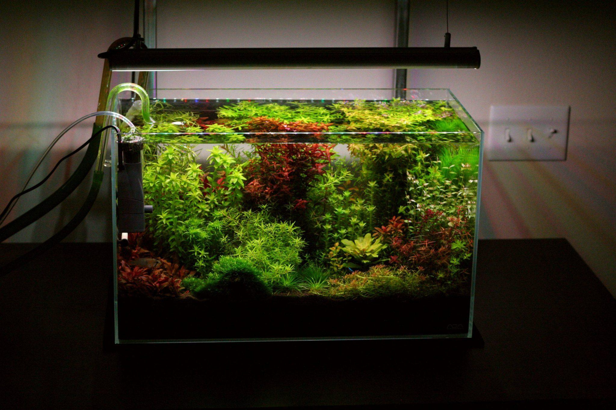 60cm aquarium aquascaping