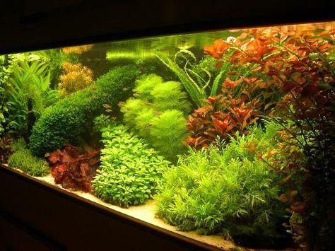 Nederlands aquarium