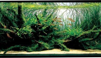 5 must-read aquascaping tips voor beginners