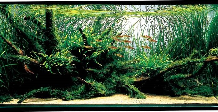 aquascaping tips voor beginners