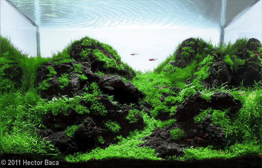 berg aquascape