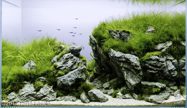 hardscape aquarium