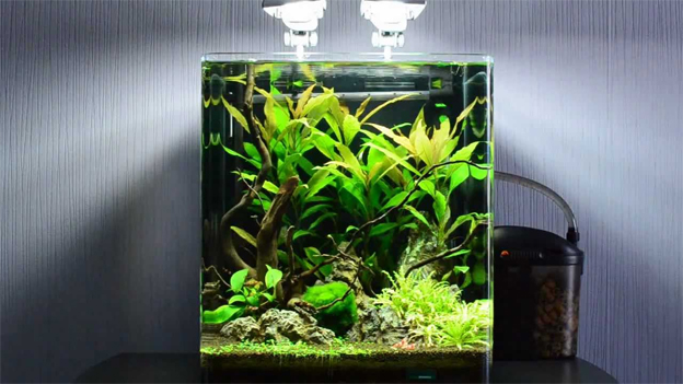 aquarium garnalen