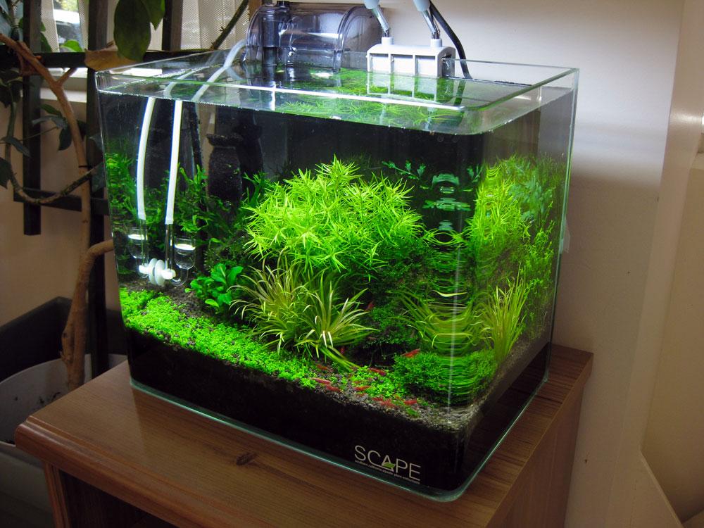 garnalen aquarium kopen