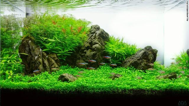 garnalen aquarium opstarten planten