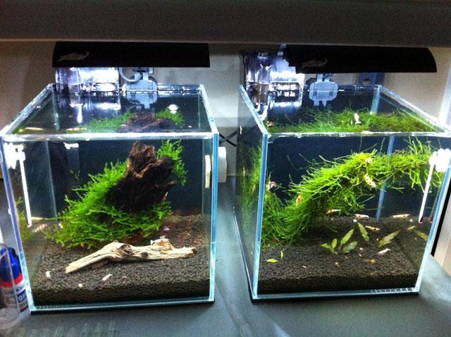 klein garnalen aquarium kopen