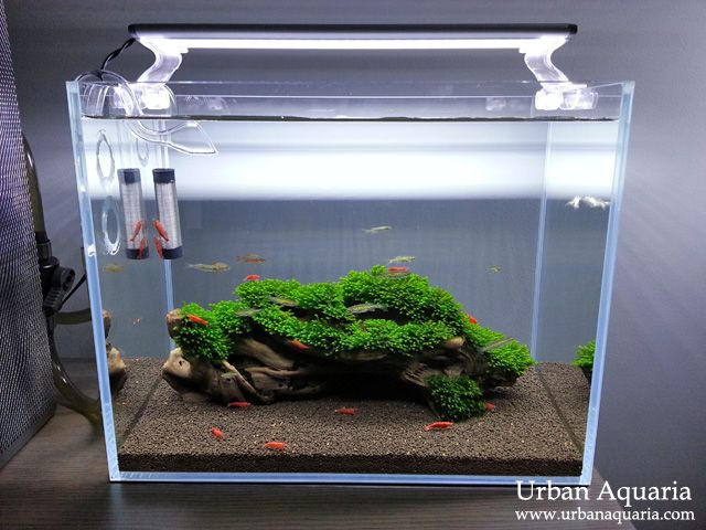 shrimp guard aquarium