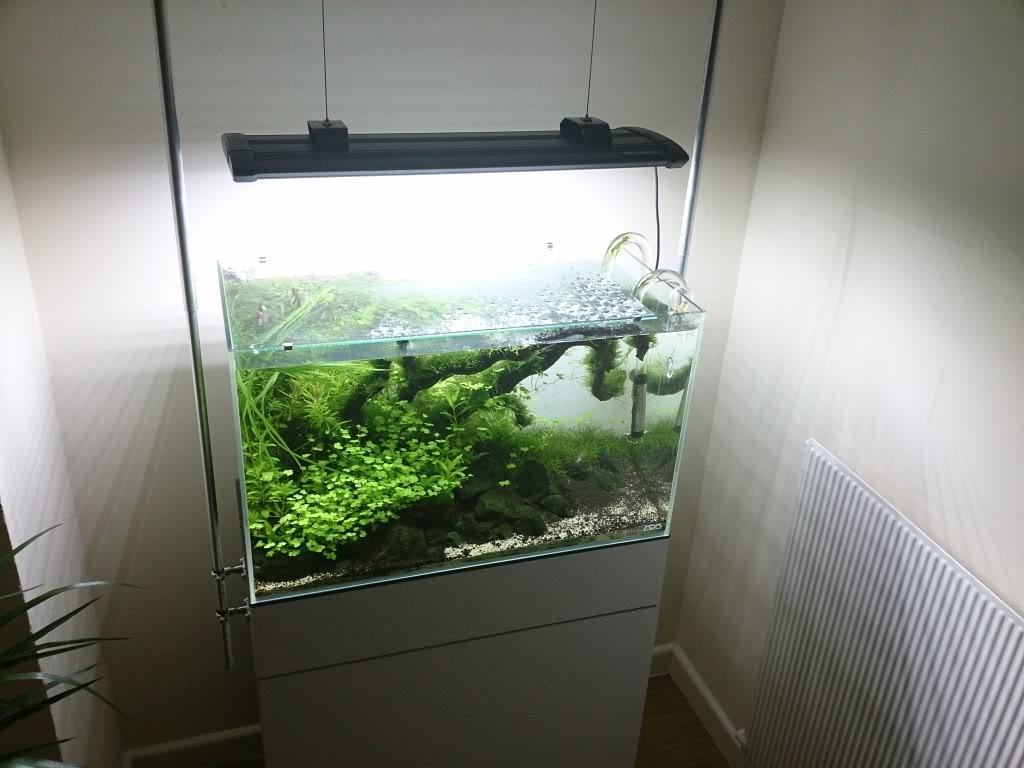 afdekruit aquarium