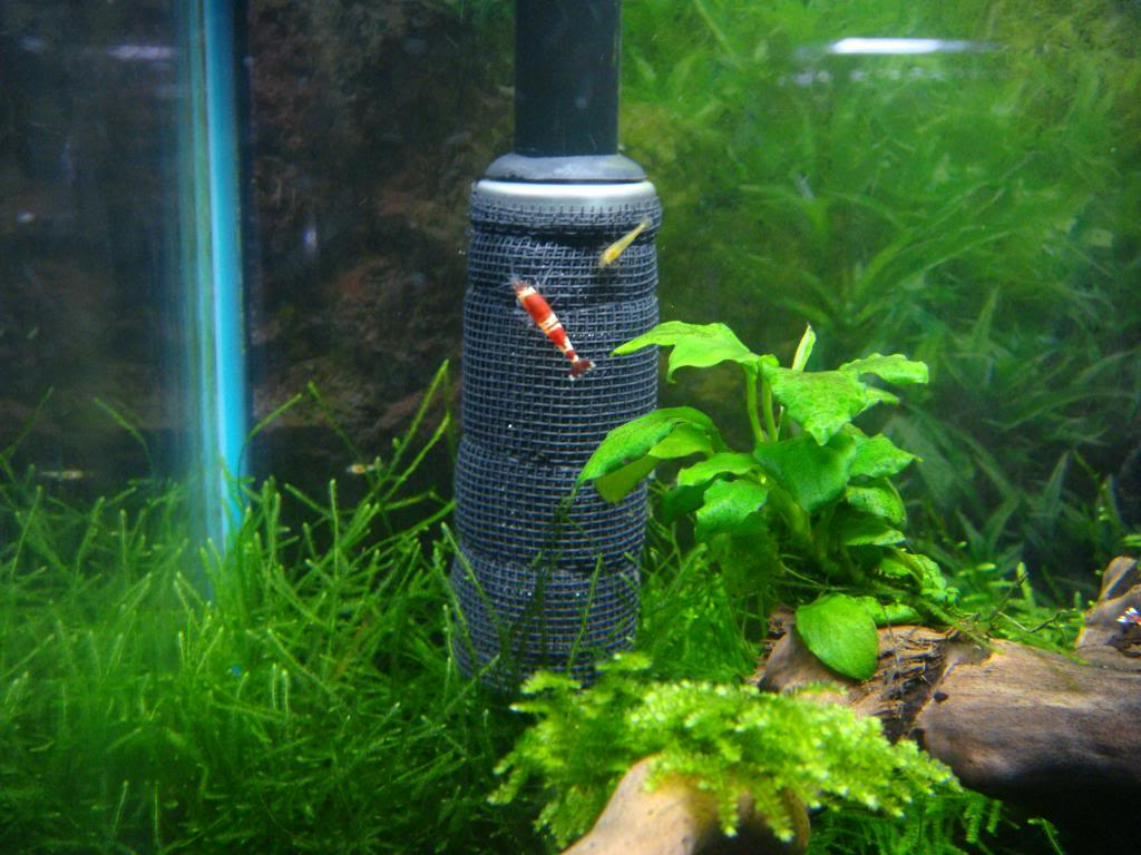 filter garnalen aquarium