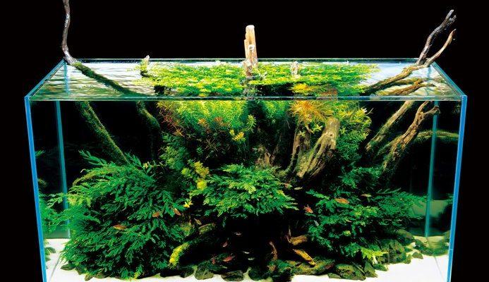 hout garnalen aquarium
