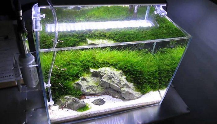 Garnalen aquariumverzorging van A tot Z (deel 3)