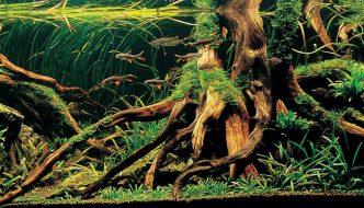 Aquariumhout: de voordelen + mijn persoonlijke tips