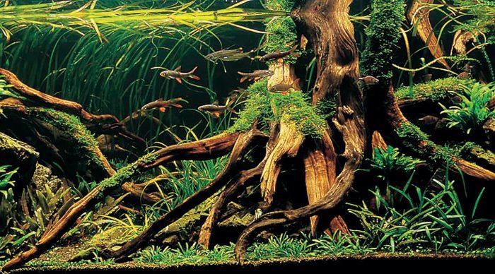 Aquariumhout: soorten & inspiratie