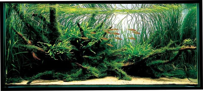 wortelhout aquarium